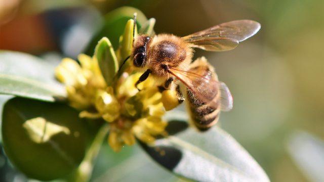 Bienenschwarm gesucht!